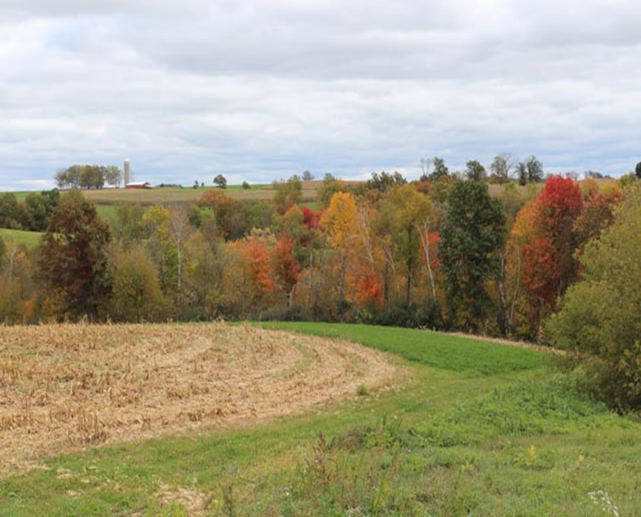 Part of a farm field is shown with autumn trees in the background.